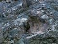 მთის ლეოპარდი ან თოვლის ლეოპარდი - ულამაზესი და უიშვიათესი ცხოველი - ინგ. Snow leopard - ლათ. Uncia uncia or Panthera uncia, რუს. сне́жный барс, или снежный леопард