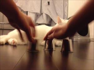 საკაიფო კატაა აზარტულ თამაშებისთვის :) KINO-MIR.DO.AM