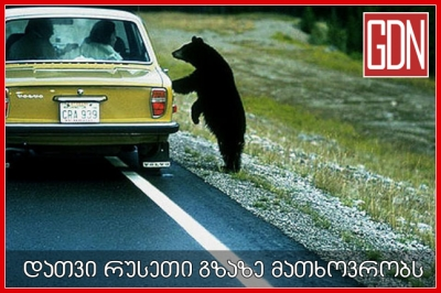 რუსეთის გზებზე დათვები 'მათხოვრობენ' | გამოიწერე გვერდი