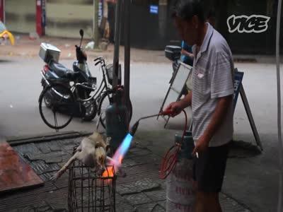 ჩინეთში ძაღლებს კლავენ, ატყავებენ და ჭამენ. სუსტი გულის მქონეებმა არ უყუროთ