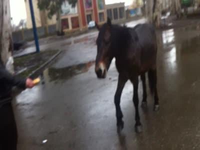 ფეხმოტეხილი ცხენი :((