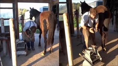 ცხენის დაჭედვა - დანალვა (ხარის, ცხენის, კამეჩის) ნალის დაკვრა, დაჭედვა.