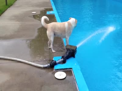 ნახეთ ძაღლი რას აკეთებს :))